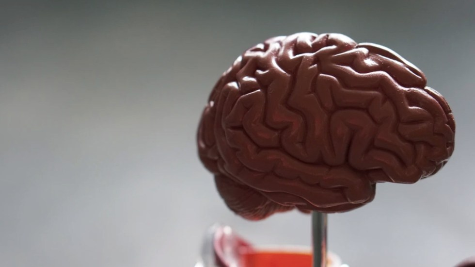 Identifican al gen responsable de nueva enfermedad neurológica - Foto de Robina Weermeijer / Unsplash