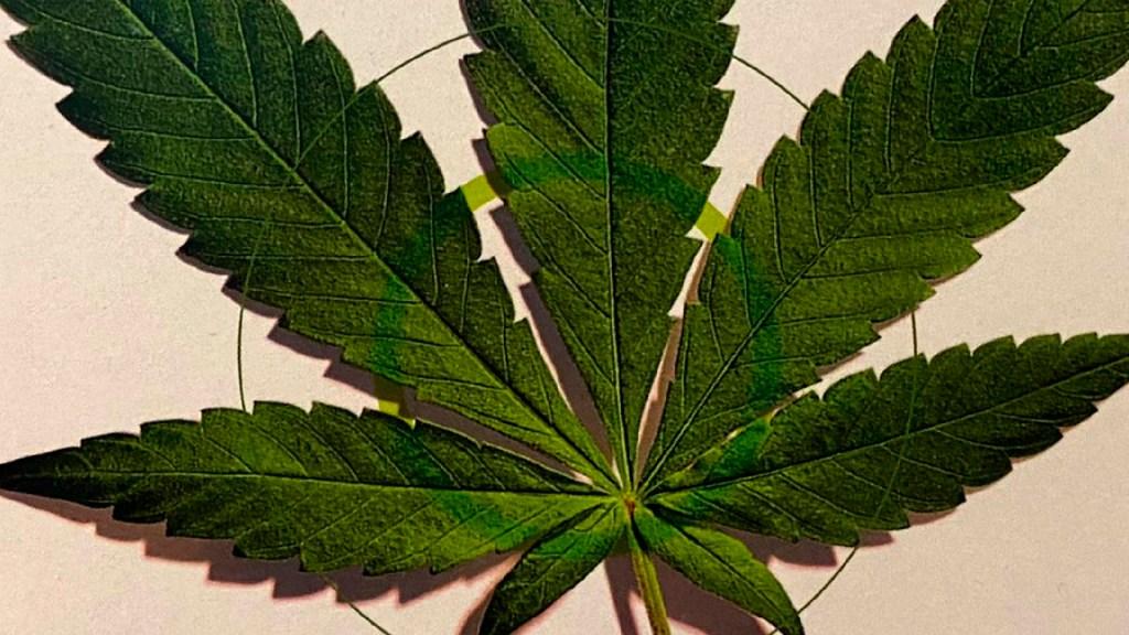 México aplicará impuesto especial a la mariguana, confirma Hacienda - Este jueves Senado retoma discusión en el Pleno sobre el consumo lúdico de la mariguana. Foto Twitter @ManceraMiguelMX