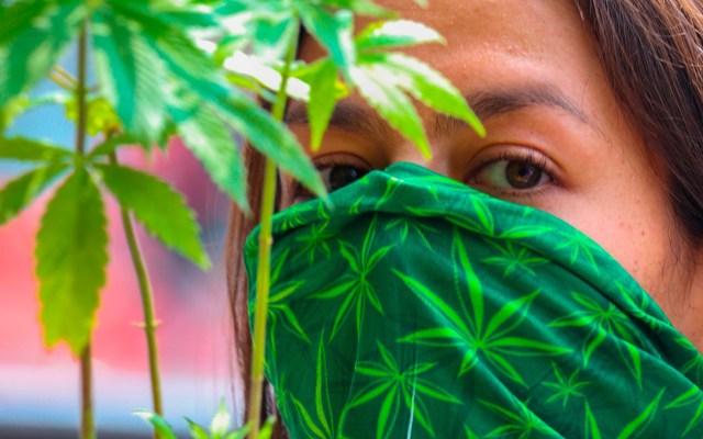 """Preocupa a Arquidiócesis regularización de la mariguana; """"dará entrada a drogas más peligrosas y adictivas"""", lamenta - Manifestante a favor de la legalización de la mariguana en las inmediaciones del Senado de la República. Foto de EFE"""