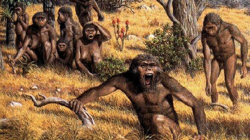 Fósil revela cambios en especie humana extinta por cambio climático - Paranthropus robustus. Foto Especial