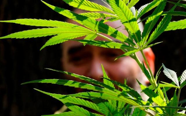 Consumidores de cannabis lamentan prórroga otorgada al Congreso para legalizar uso recreativo de la mariguana - Consumidores de mariguana lamentan prórroga otorgada al Congreso. Foto EFE