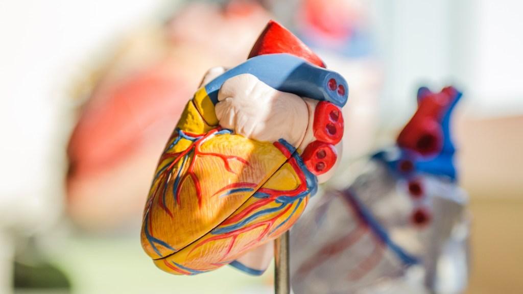 Mujeres tienen más riesgo de morir por infarto que hombres - Foto de Unsplash