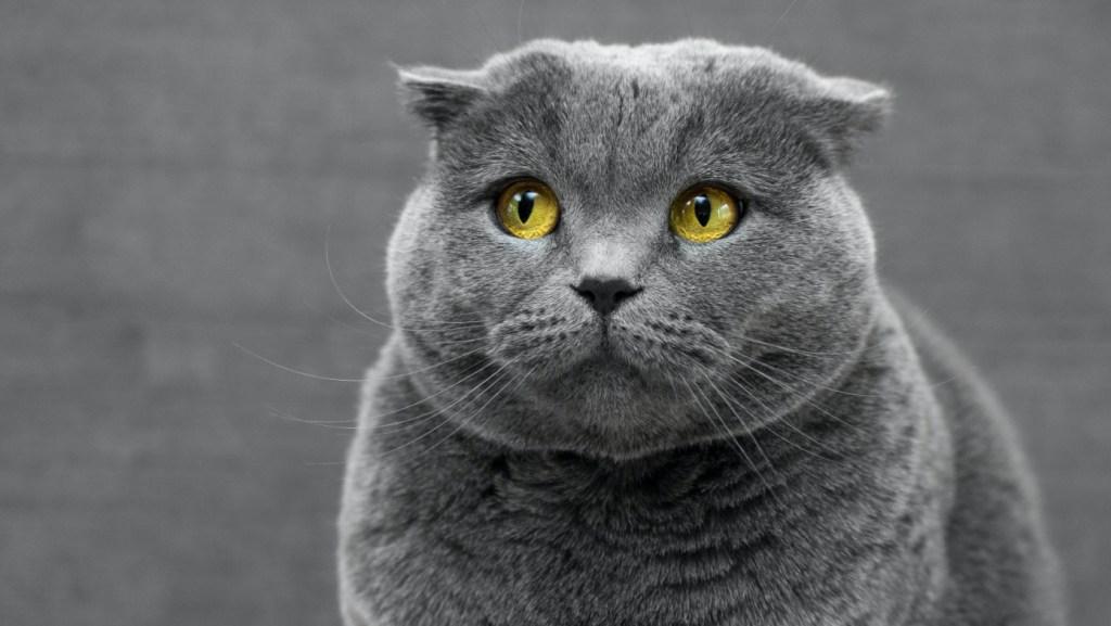 Fiesta de cumpleaños a un gato deja 15 personas contagiadas por COVID-19 - Foto de Max Baskakov para Unsplash