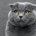Fiesta de cumpleaños a un gato deja 15 personas contagiadas por COVID-19