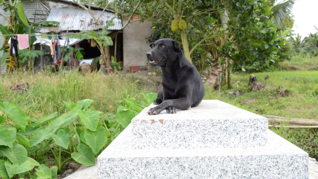 La perra que no abandona la tumba de un niño de dos años ahogado en Vietnam - Mino sobre la tumba de su dueño, un niño de dos años que murió ahogado. Foto de EFE