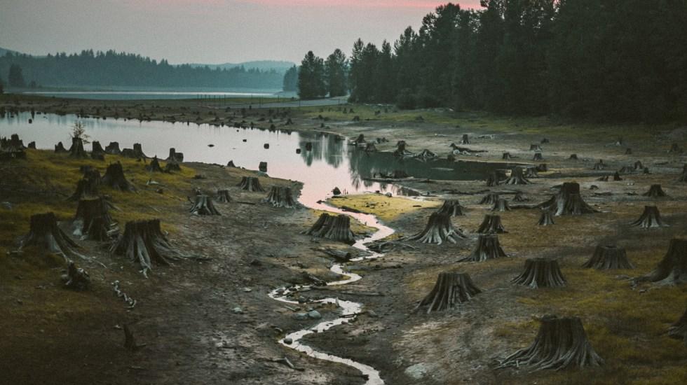En 13 años se ha deforestado en el mundo un área equivalente a California - Foto de Karsten Winegeart / Unsplash