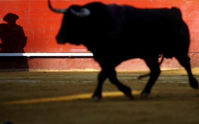 Alcaldía de Quito prohíben espectáculos con sufrimiento de animales - Foto de EFE