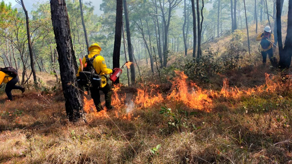 """Pronostican temporada """"crítica"""" de incendios forestales en México - Foto de @CONAFOR"""