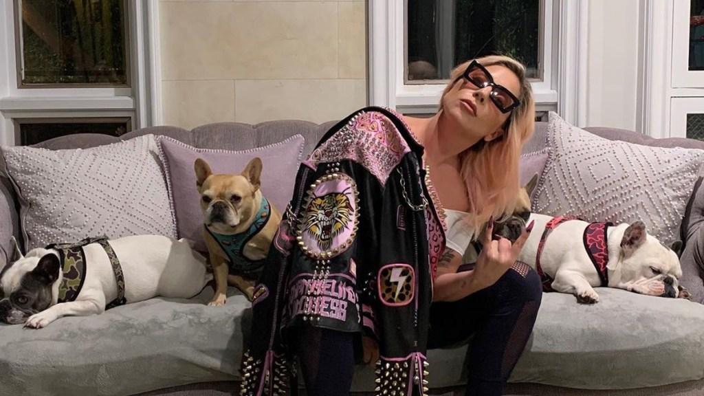 Lady Gaga recupera ilesos a los dos perros que le habían robado - Lady Gaga con sus tres perros bulldog. Foto de @ladygaga