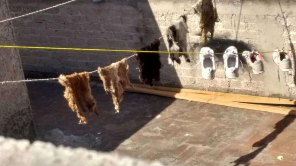 Denuncian presuntos sacrificios animales en Neza; familia tendía pieles al Sol - Pieles de animales en tendedero de familia en Neza. Foto de La Camada Nitin Neza
