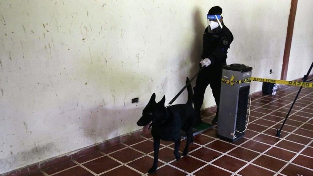 El Salvador utilizará perros para detectar COVID-19 - El Salvador usará perros para detectar COVID-19. Foto de EFE