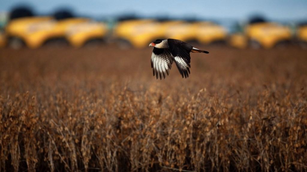 Alertan sobre peligros a soberanía alimentaria por agrotóxicos - Alertan de peligros a la soberanía alimentaria en Latinoamérica por agrotóxicos. Foto de EFE