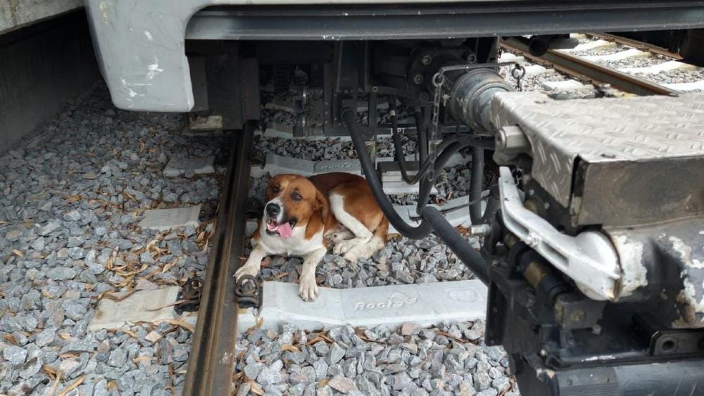 Rescatan a perro que ingresó a vías del Tren Ligero de CDMX - perro Tren Ligero rescate CDMX