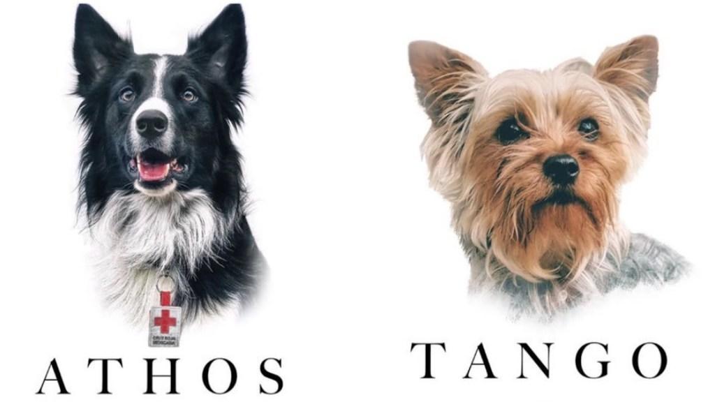 Envenenan a Athos y Tango, dos perros de la Cruz Roja - Envenenan a Athos y Tango, dos perros de la Cruz Roja. Foto de Cruz Roja