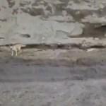 #Video Localizan con vida a dos perros que cayeron al socavón de Puebla