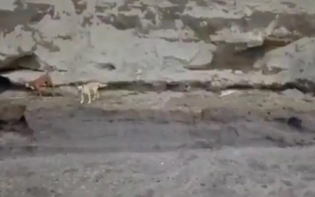 #Video Localizan con vida a dos perros que cayeron al socavón de Puebla - #Video Localizan con vida a dos perros que cayeron al socavón de Puebla. Foto tomada de video
