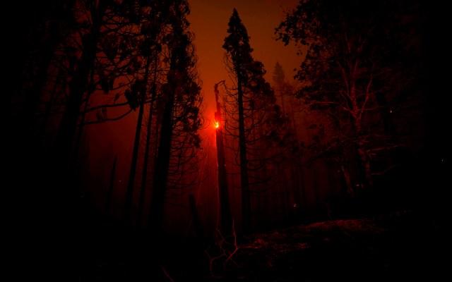 Incendio originado en el Parque Nacional de Sequoias de Johnsondale - Incendio originado en el Parque Nacional de Sequoias de Johnsondale, en California, EEUU. Foto de EFE/ ETIENNE LAURENT.