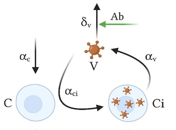 modelo matemático vacunas
