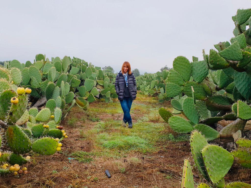 nopales en la zona arqueológica de teotihuacán
