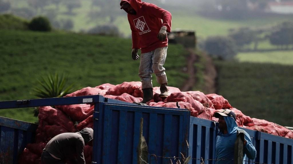 México investiga posible salmonelosis en cebollas tras brote en EE.UU. - México investiga posible salmonelosis en cebollas tras brote en EE.UU.. Foto de EFE