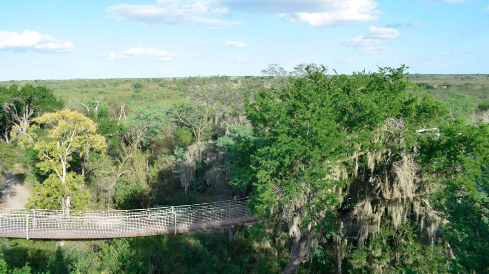 Hallan sano y salvo niño latino perdido tres días en bosque de Texas - bosque en Texas.