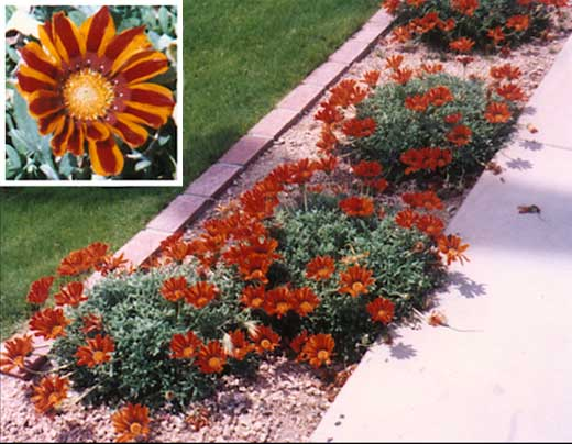 Ground Cover  Lopez Landscaping