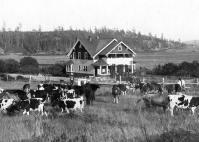 Davis Ranch