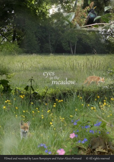 eyes in the meadow affiche (903x1280)