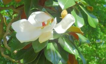 fleur-jardindesplantes-nantes-curiouscat-dsc05948-min