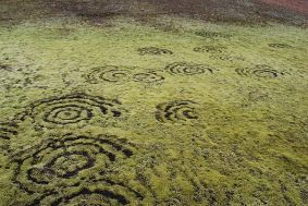 800px-Fairy_ring_on_Iceland-min