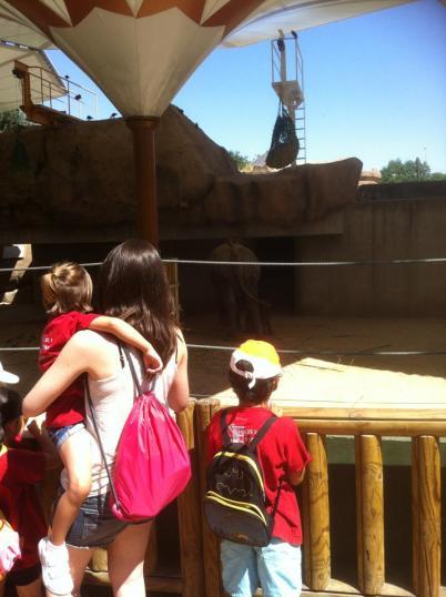 Voluntariado en el zoo