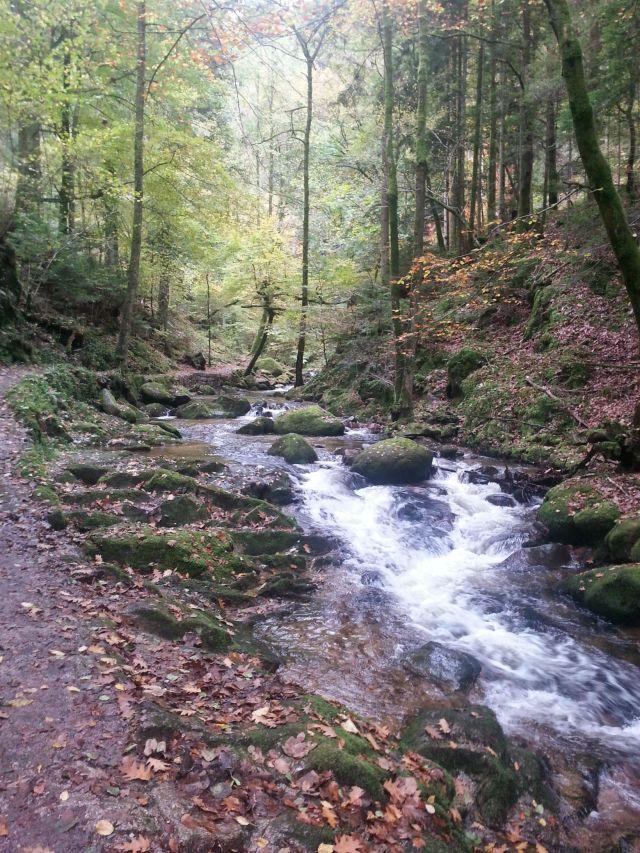 Río Rin en la Selva Negra.