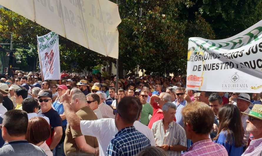 Miles de agricultores se manifiestan en Jaén por el bajo precio del aceite de oliva