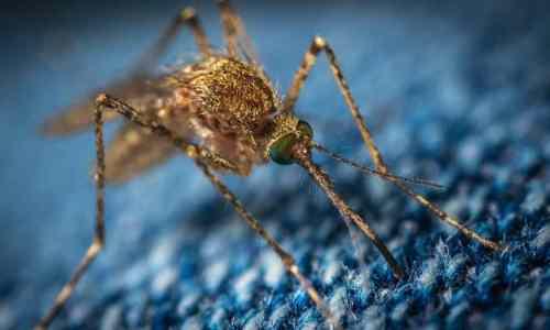Oxitec crea y libera mosquitos modificados genéticamente para prevenir enfermedades