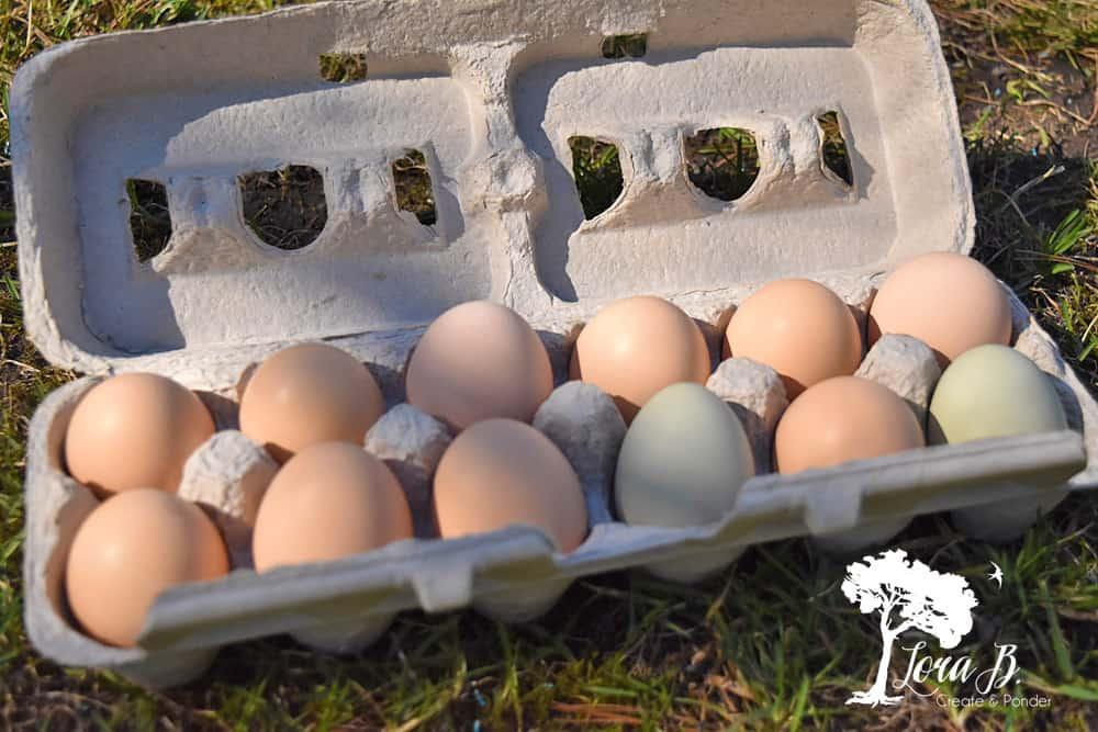 fresh farmhouse eggs