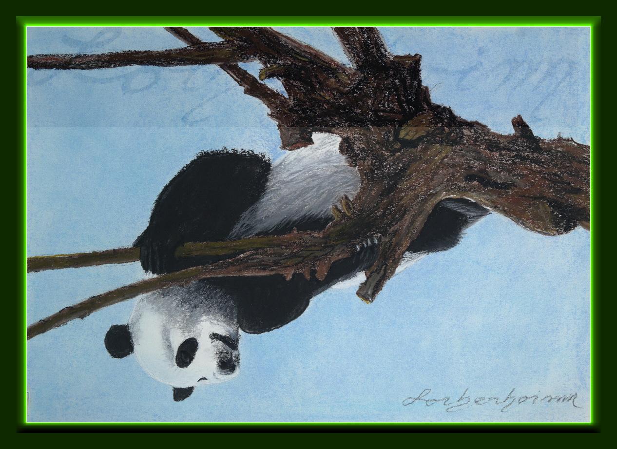 Panda on tree. Lorberboim Soft Pastel Painting.