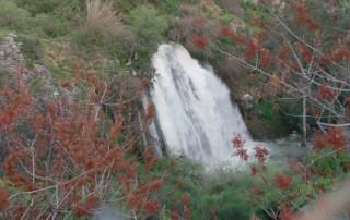 Lorberboim Times Upper Galilee and Golan water falls at peak flow.