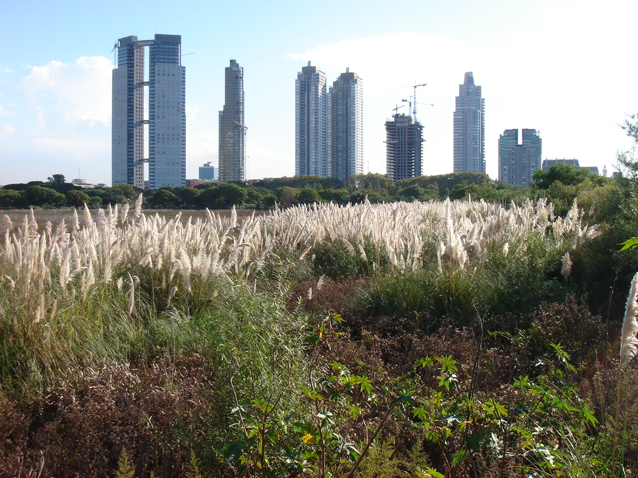 from the ecological park right in Buenos Aires