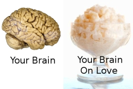 Brain = Rice Pudding. Any Questions?