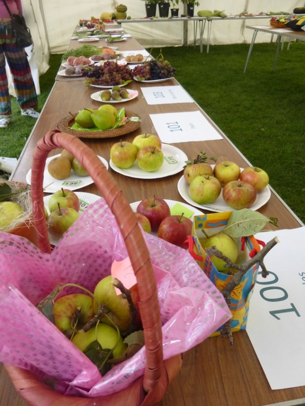 Tottenham Flower and Produce Show 2015 - apples