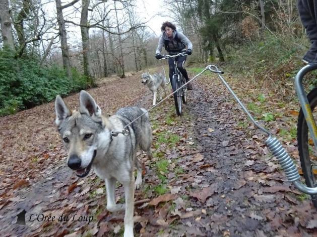 VTT vélo chien loup tchécoslovaque
