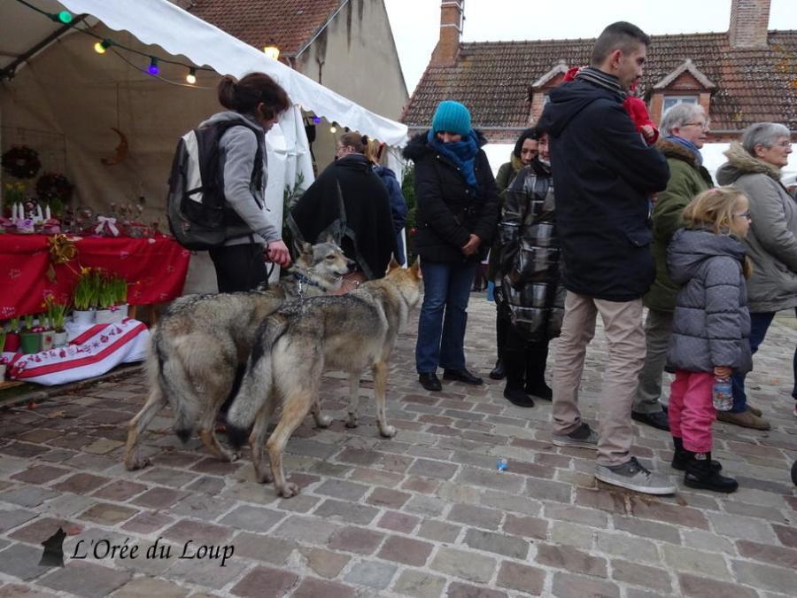 chien-loup-tchecoslovaque-ville