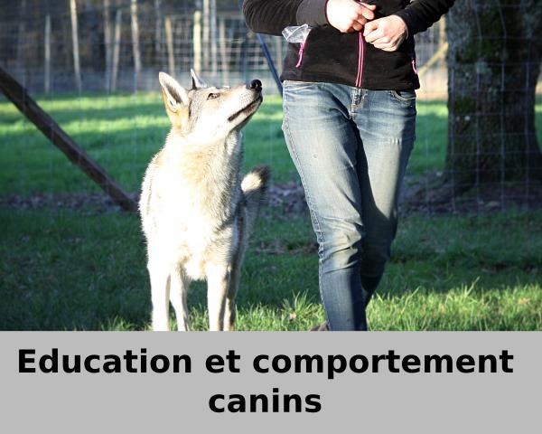 education-chien