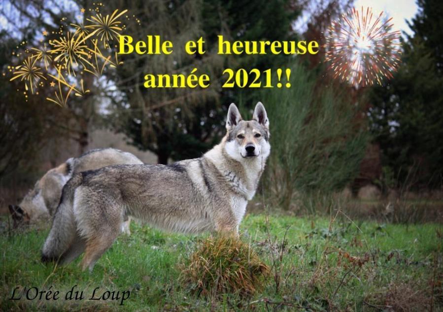 loree-du-loup_bonne-annee