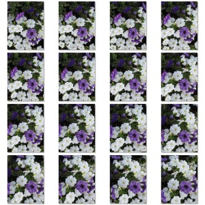 multiples-1_contact_sheet