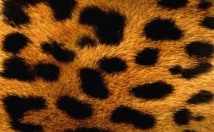 Animal print material