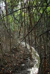 mangrove du parco historico