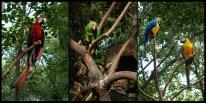 *parrots-1-low