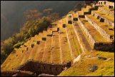 terraces du secteur agricole