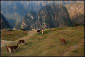 llamas grassing near the caretaker hut